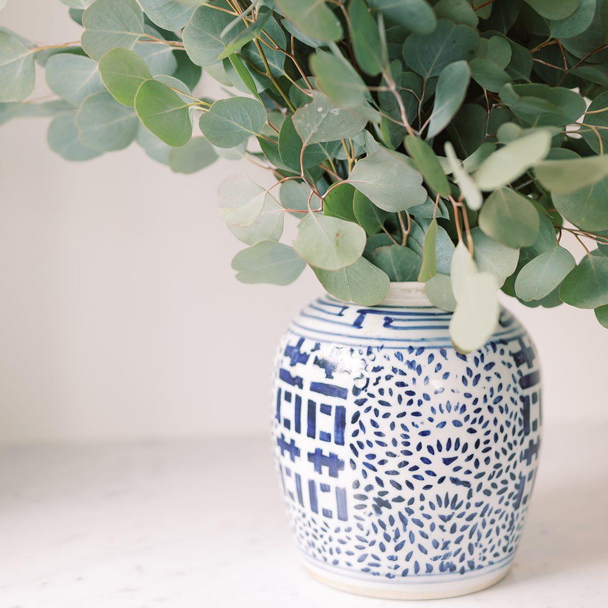 Eucalyptus in blue and white vase
